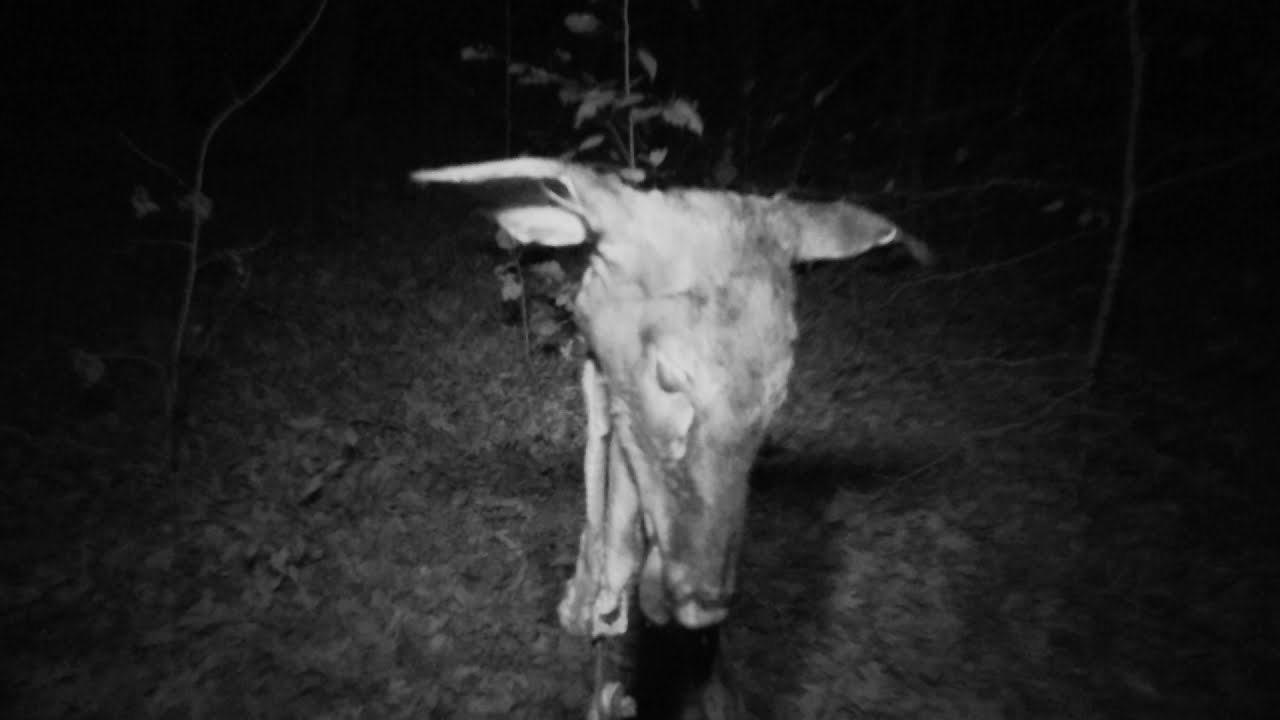 Show runners hung a goat head and claimed Bigfoot left a warning to the hunters