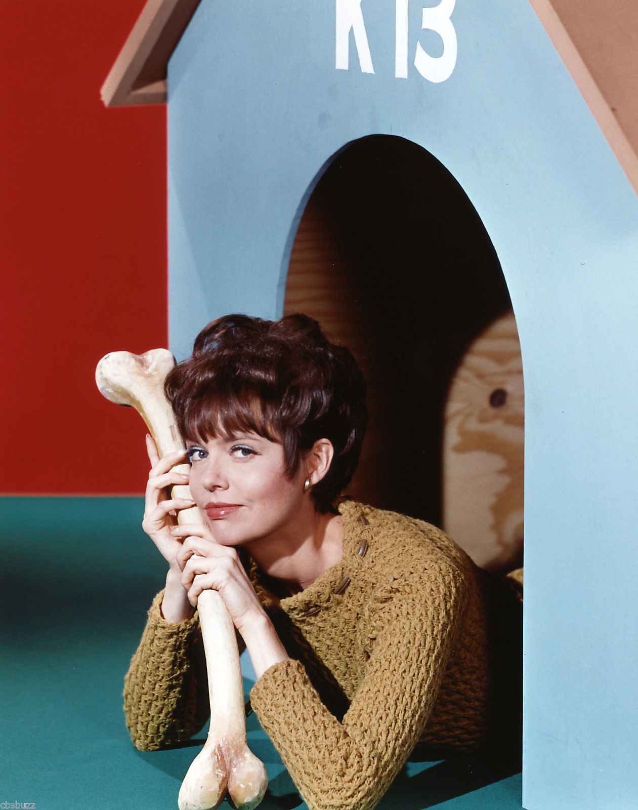 Barbara Feldon holding toy dog bones and laying inside a kennel for a photoshoot