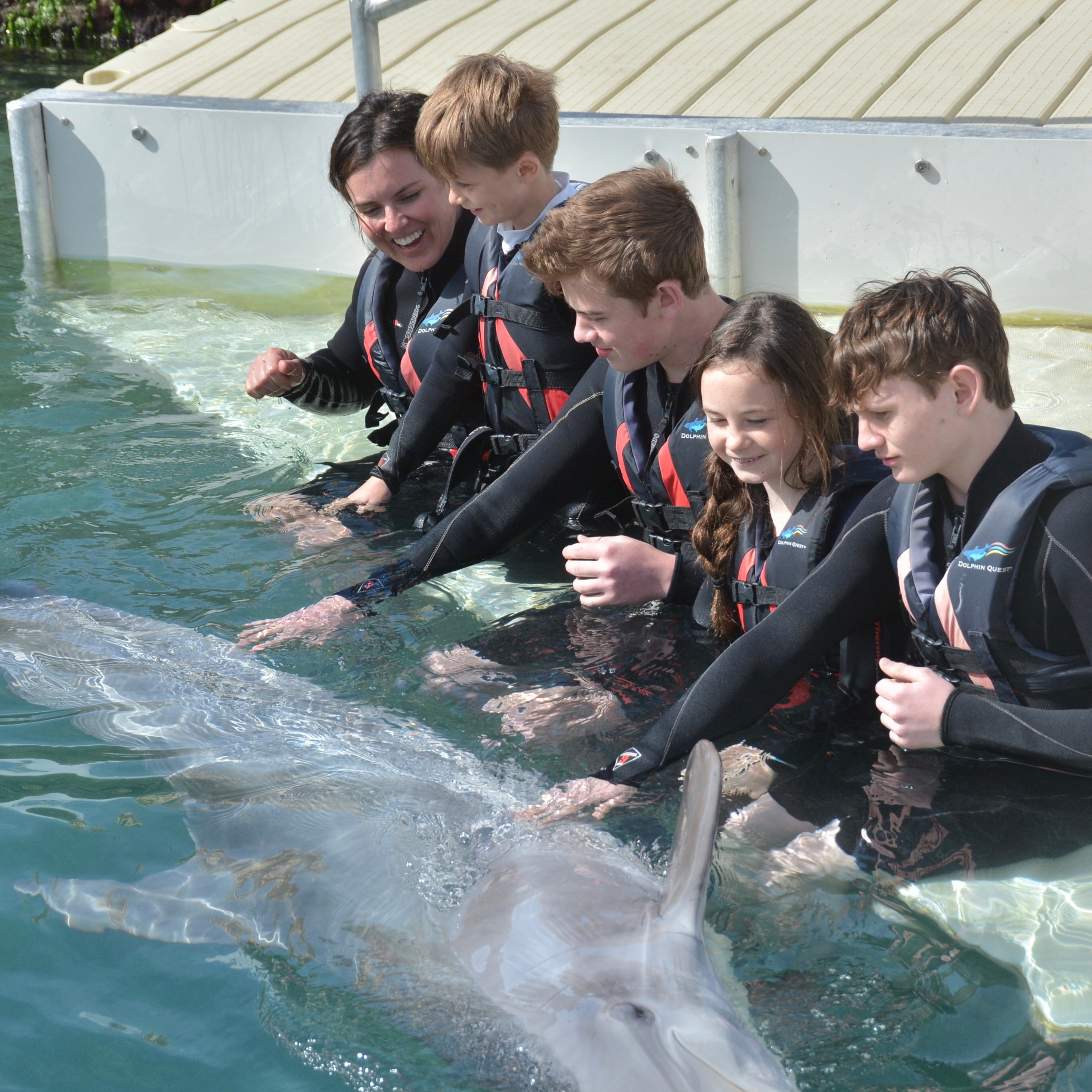 Amy Freeze and kids play with a dolphin in Bermuda